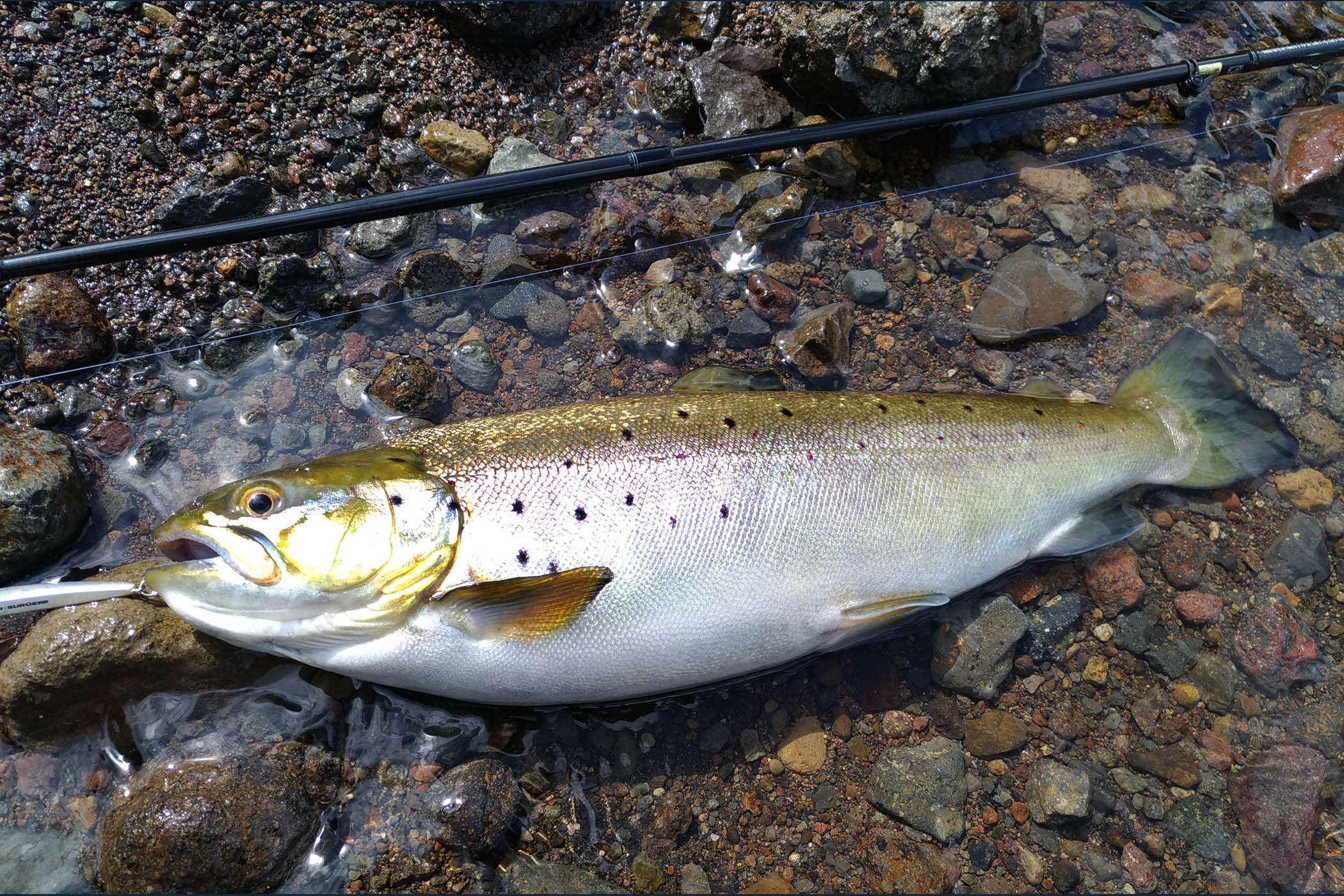芦ノ湖 西岸で初釣果